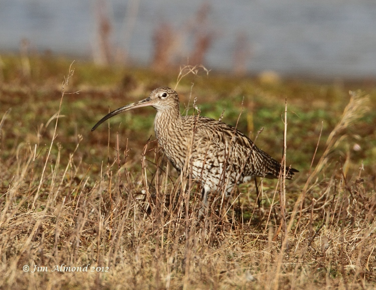 Curlew VP 4 3 12  IMG_0704